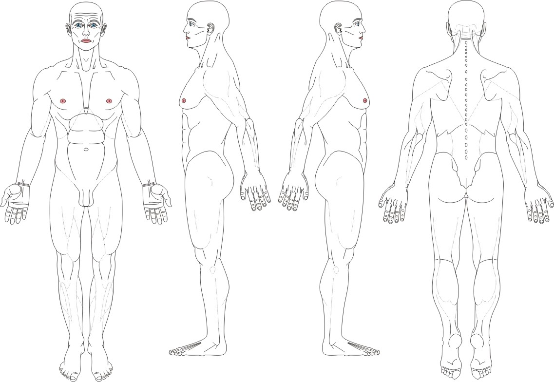 Male body diagram